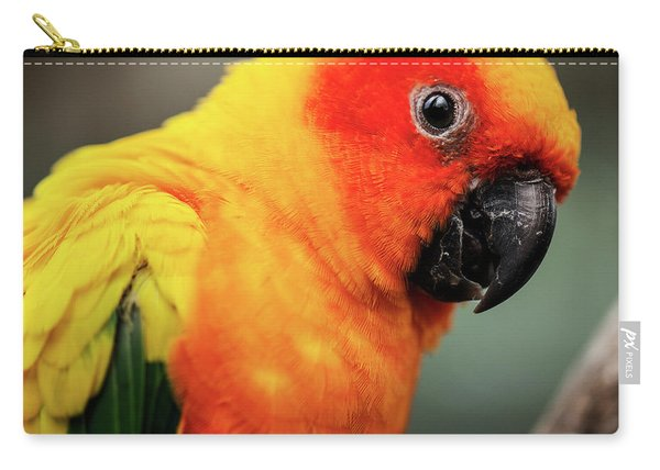 Close Up Of A Sun Conure Parrot. Carry-all Pouch