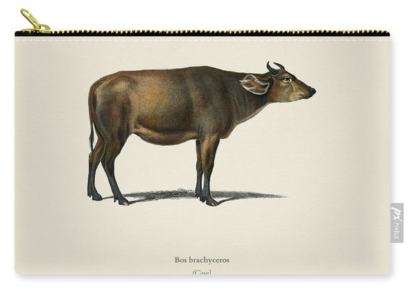 Cow  Bos Brachyceros  Illustrated By Charles Dessalines D' Orbigny  1806-1876  Carry-all Pouch