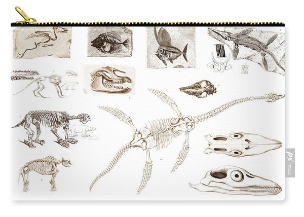 Different Types Of Ancient Fossils Illustrated By Charles Dessalines D' Orbigny  1806-1876  Carry-all Pouch
