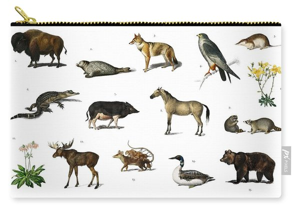 Different Types Of Animals Illustrated By Charles Dessalines D' Orbigny  1806-1876 3 Carry-all Pouch