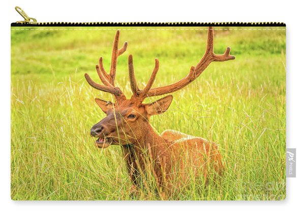 Carry-all Pouch featuring the photograph Elk by Dheeraj Mutha