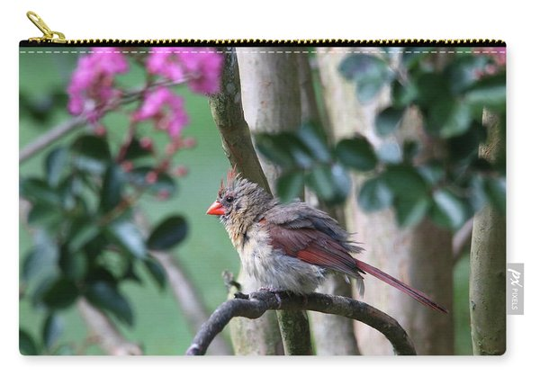 Fluffy Female Cardinal Carry-all Pouch