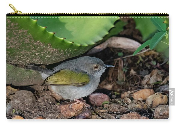 Gray-backed Camaroptera Carry-all Pouch