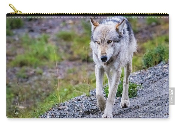 Grey Wolf In Denali National Park, Alaska Carry-all Pouch