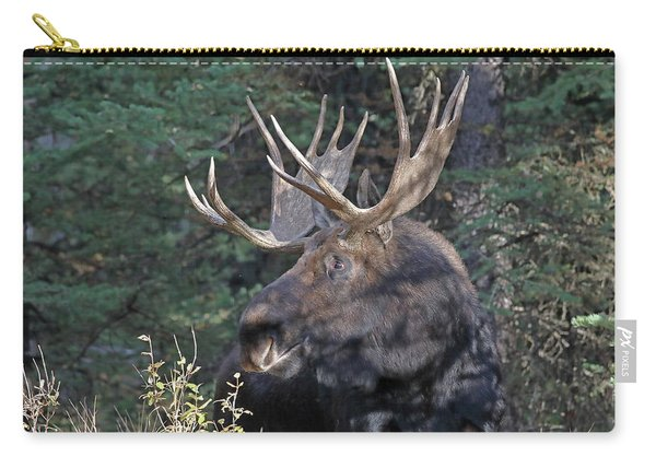 Carry-all Pouch featuring the photograph Head Study Of Bull Moose by Jean Clark