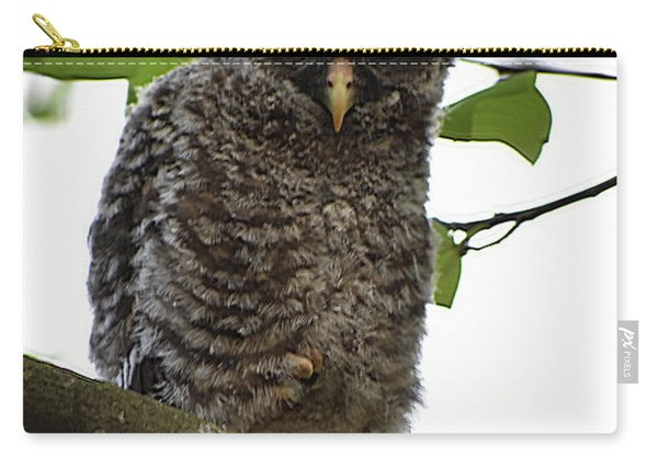 Immature Barred Owl Carry-all Pouch