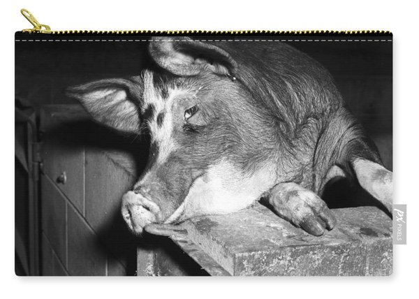 Intensive Minimal Disease Piggery  Queensland Agricultural College  Gatton  December 1969 Carry-all Pouch