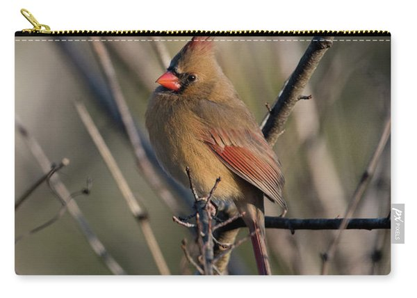 Lady Cardinal Carry-all Pouch