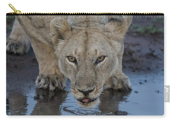 Lioness Drinking Carry-all Pouch