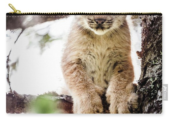 Carry-all Pouch featuring the photograph Lynx Kitten In Tree by Tim Newton