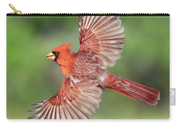 Male Cardinal In Flight Carry-all Pouch
