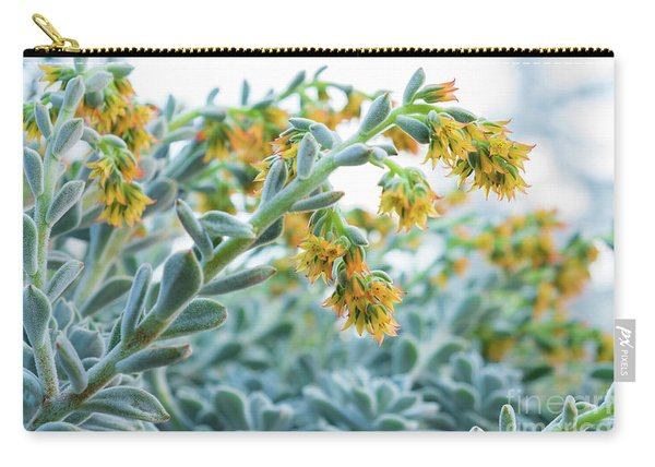 Mexican Echeveria In The  Morning Carry-all Pouch