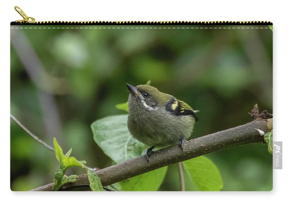 Moustached Tinkerbird Carry-all Pouch