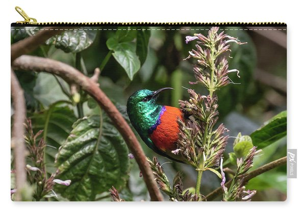 Northern Double-collared Sunbird Carry-all Pouch