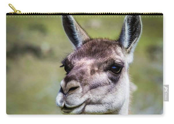 Portrait Of A Guanaco, Patagonia Carry-all Pouch