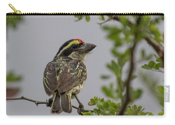 Red-fronted Barbet Carry-all Pouch