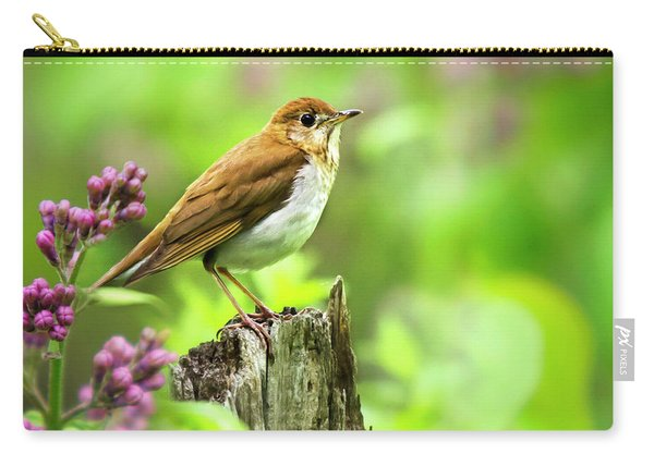 Spring Bird Veery Square Carry-all Pouch