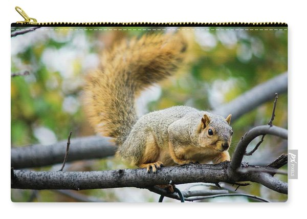 Squirrel Crouching On Tree Limb Carry-all Pouch