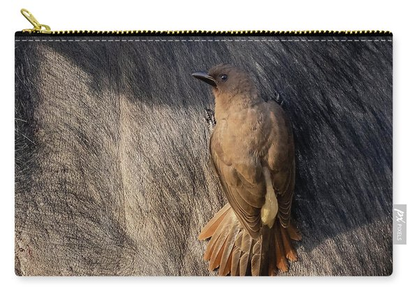 Sub-adult Yellow-billed Oxpecker On Cape Buffalo Carry-all Pouch