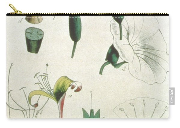 Various Flowers With Five Stamens, Illustrating Elements Of Botany As Explained By Carolus Linnaeus Carry-all Pouch