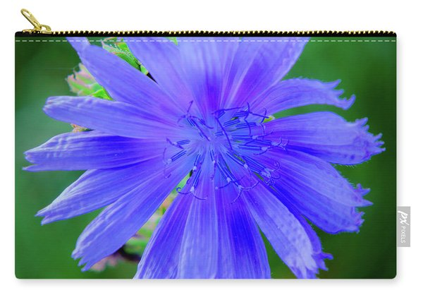 Vibrant Blue Chicory Blossom Close-up With Its Delicate Petals And Stamen Carry-all Pouch