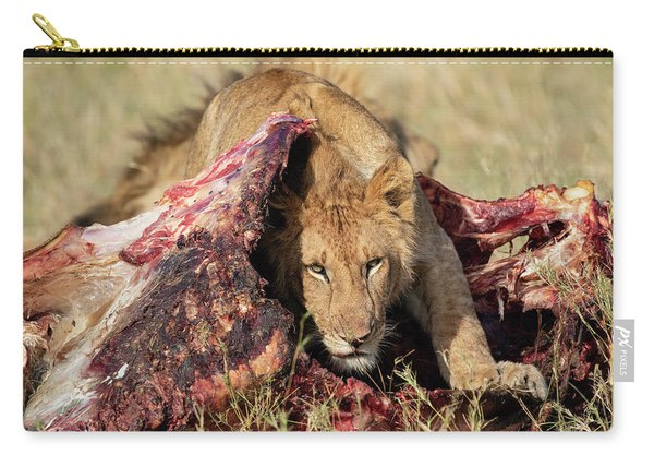Young Lion On Cape Buffalo Kill Carry-all Pouch