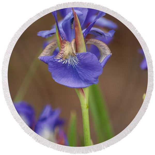 Purple Bearded Iris Round Beach Towel