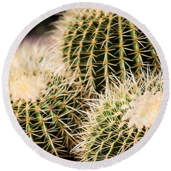 Triple Cactus Round Beach Towel