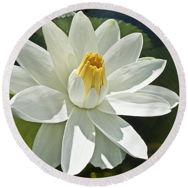 White Water Lily - Nymphaea Round Beach Towel