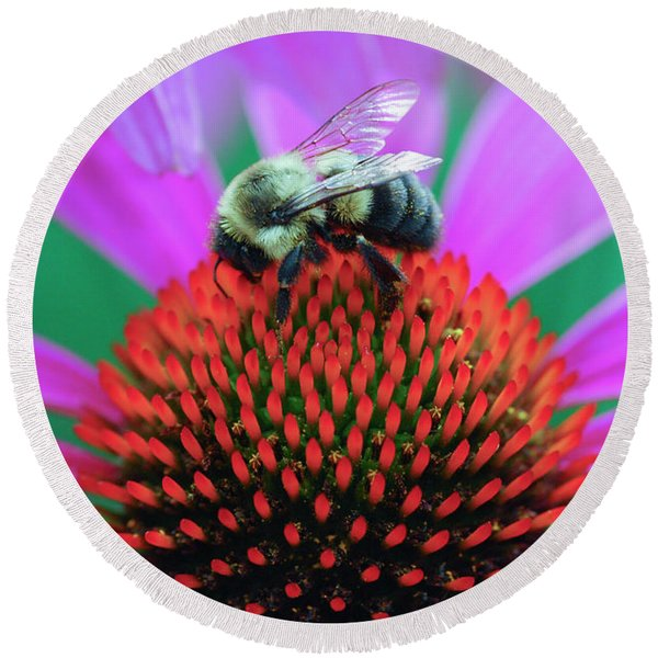 Bumblebee On Flower Round Beach Towel