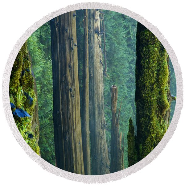 Round Beach Towel featuring the photograph Northwest Forest    by Mary Lee Dereske