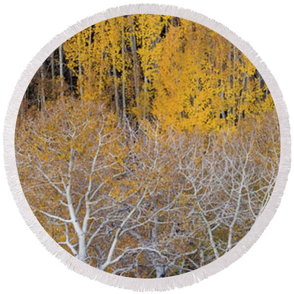 Aspen Trees In A Forest, Boulder Round Beach Towel