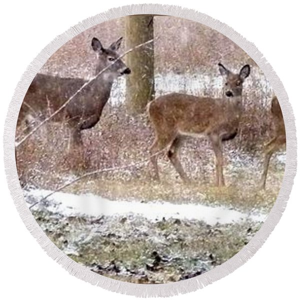 A Dusting On The Deer Round Beach Towel