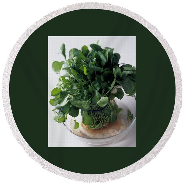 A Watercress Plant In A Bowl Of Water Round Beach Towel