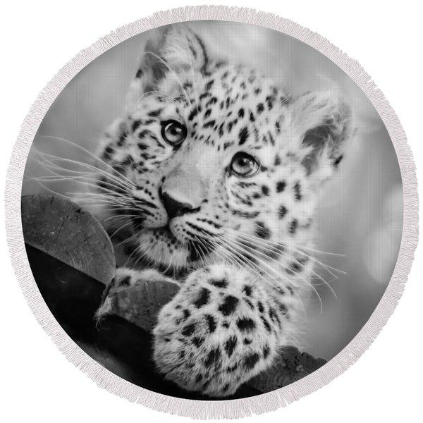 Amur Leopard Cub Portrait Round Beach Towel