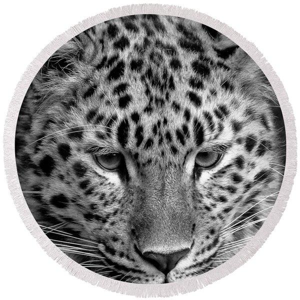 Amur Leopard In Black And White Round Beach Towel