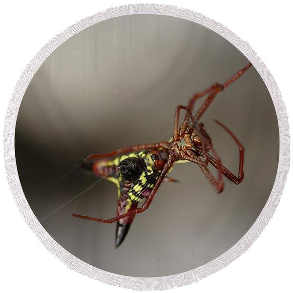 Arrow-shaped Micrathena Spider Starting A Web Round Beach Towel