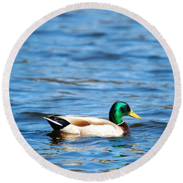 Beautiful Male Mallard Round Beach Towel