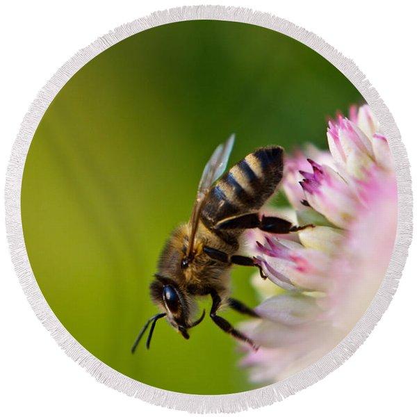Bee Sitting On A Flower Round Beach Towel