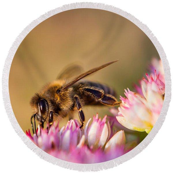 Bee Sitting On Flower Round Beach Towel