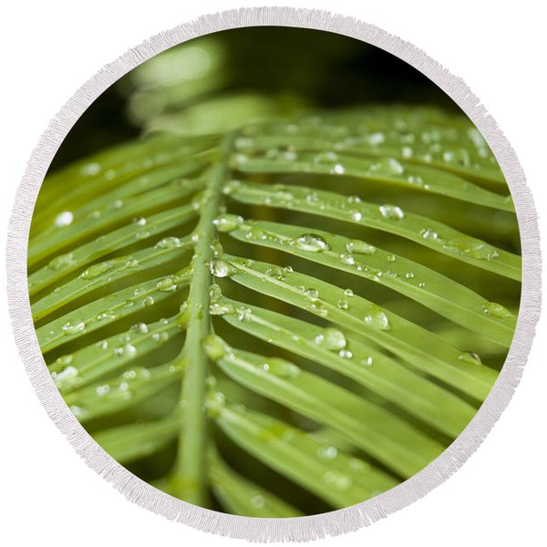 Round Beach Towel featuring the photograph Bending Ferns by Carolyn Marshall