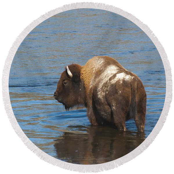 Bison Crossing River Round Beach Towel