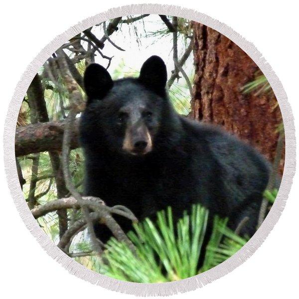 Black Bear 1 Round Beach Towel