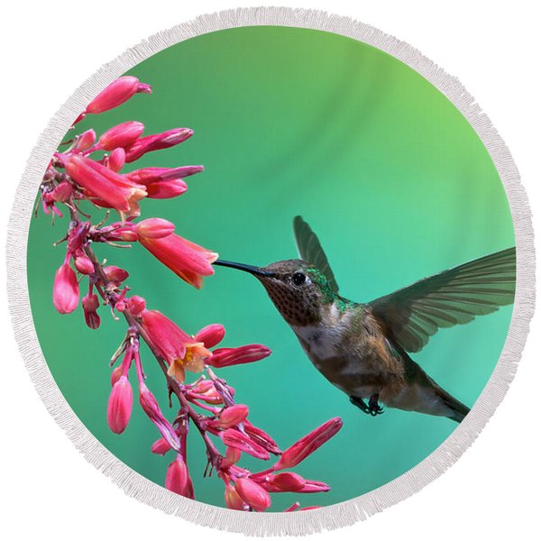 Round Beach Towel featuring the photograph Black Chinned Hummingbird by Mary Lee Dereske