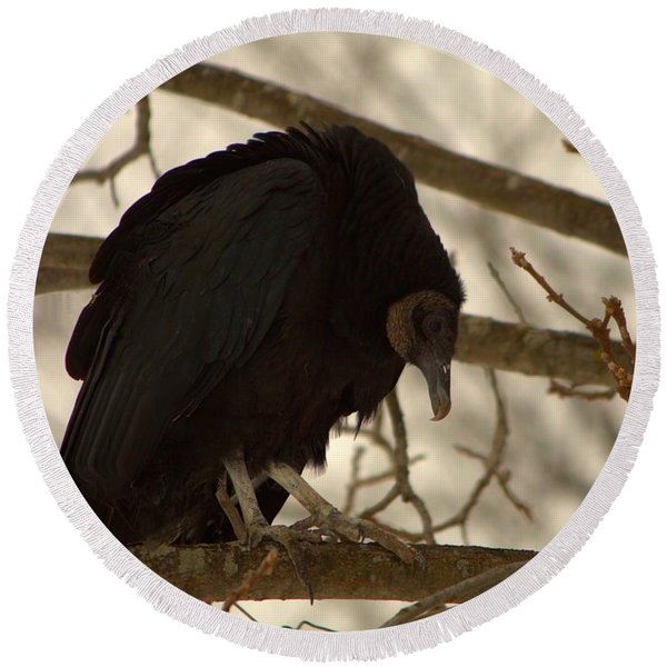 Black Vulture 4 Round Beach Towel