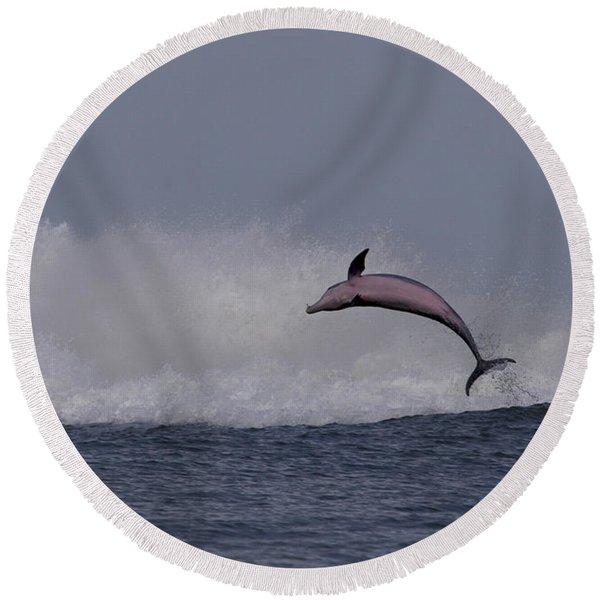 Bottlenose Dolphin Photo Round Beach Towel