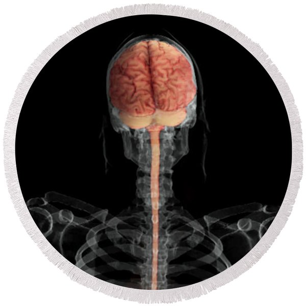Brain And Spinal Cord, Posterior View Round Beach Towel
