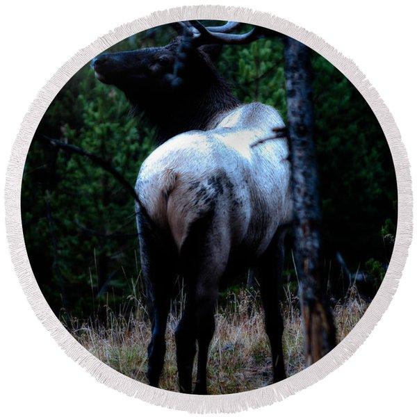 Bull Elk In Moonlight  Round Beach Towel