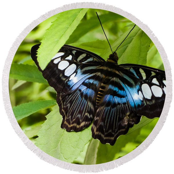 Butterfly On Leaf   Round Beach Towel