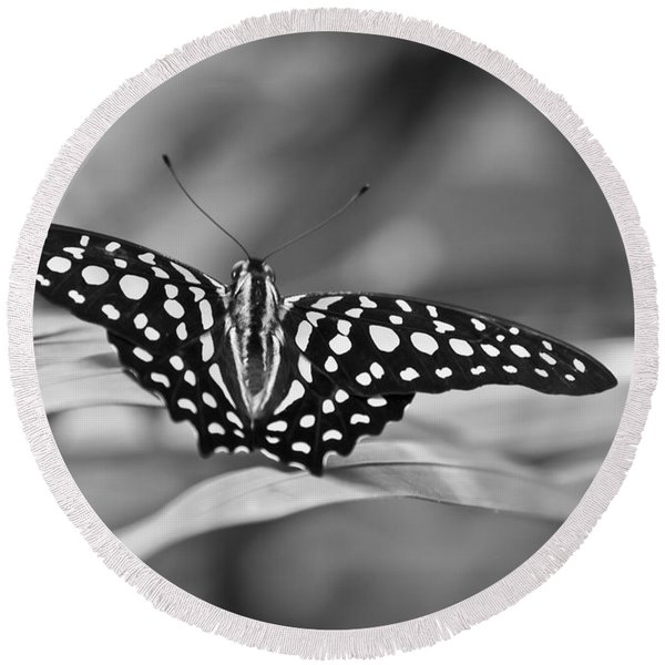 Butterfly Resting Round Beach Towel